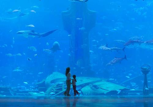 and the centre-piece of Atlantis with over 250 species of fish and sea