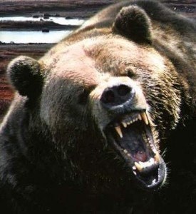 Angry Bear